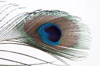 Mindset—Visualization